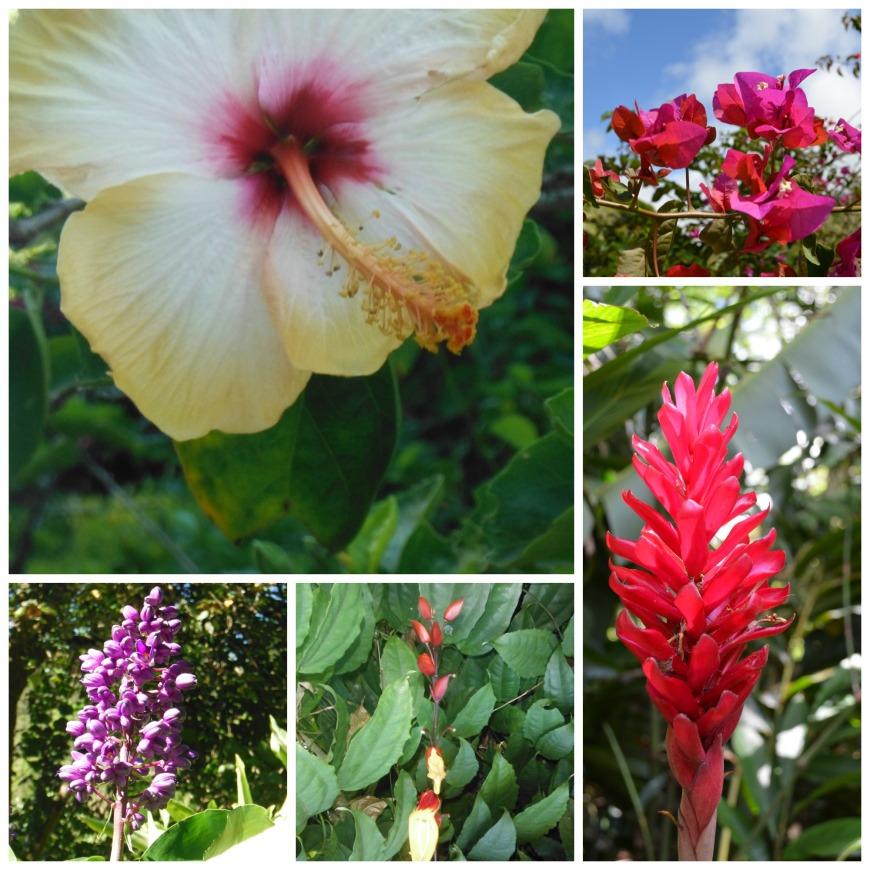 waimea flowers